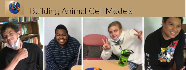 Building Animal Cell Models